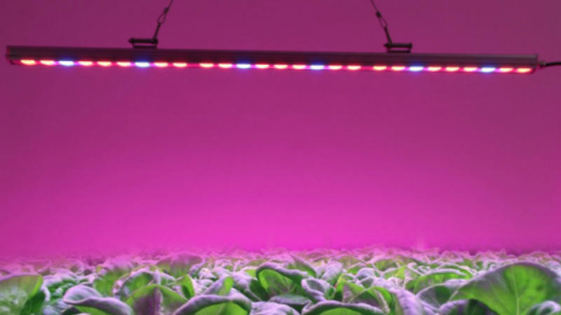 Custom Led Lighting LED plant growth lamp